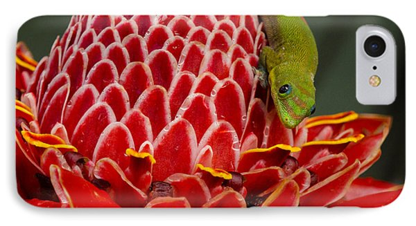 Gecko On Red Ginger IPhone Case by Inge Riis McDonald
