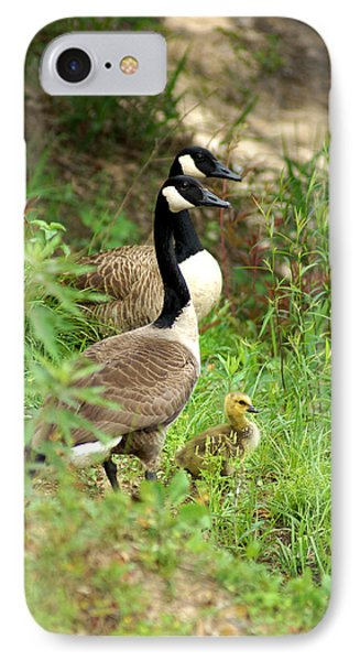 Geese And Gosling IPhone Case