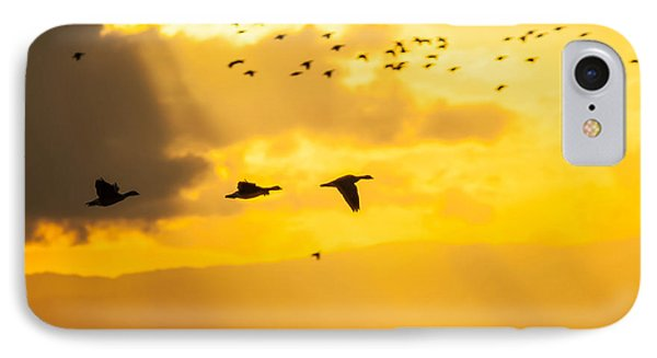 Geese At Sunset-2 IPhone Case by Brian Williamson