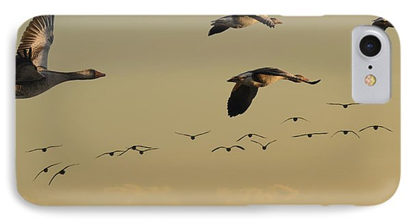 Geese Charter IPhone Case by Michael Mogensen