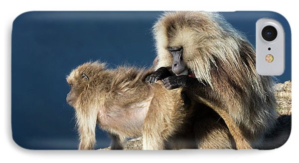 Gelada Baboons Grooming IPhone Case by Peter J. Raymond