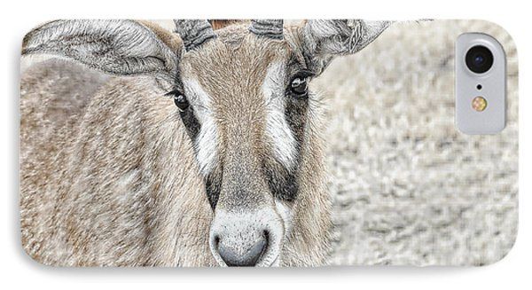 IPhone Case featuring the photograph Young Oryx by Dyle   Warren