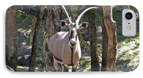 Gemsbok In The Woods IPhone Case by CML Brown