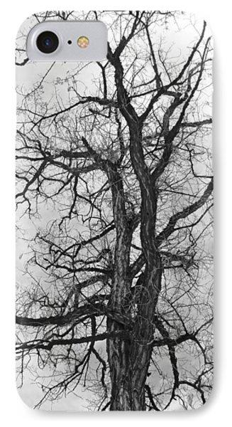Genoa Tree IPhone Case