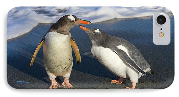 Gentoo Penguin Chick Begging For Food IPhone Case by Yva Momatiuk and John Eastcott