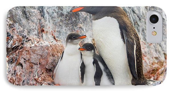 Gentoo Penguin Family Booth Isl IPhone Case by Yva Momatiuk and John Eastcott