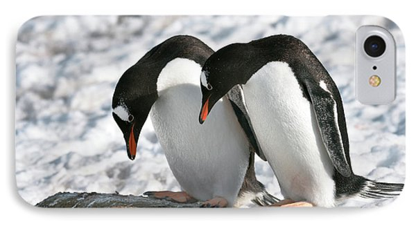 Gentoo Penguins Pair Bonding IPhone Case