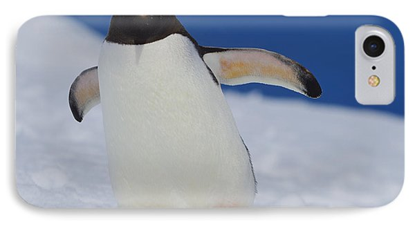 Gentoo Waddle Phone Case by Tony Beck
