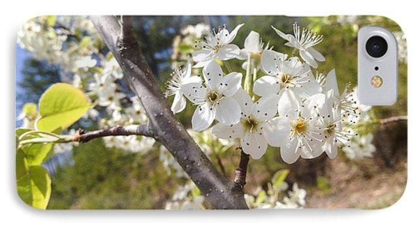 Georgia Blossoms IPhone Case by Jan Dappen