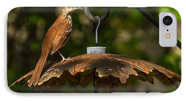 IPhone Case featuring the photograph Georgia State Bird - Brown Thrasher by Robert L Jackson