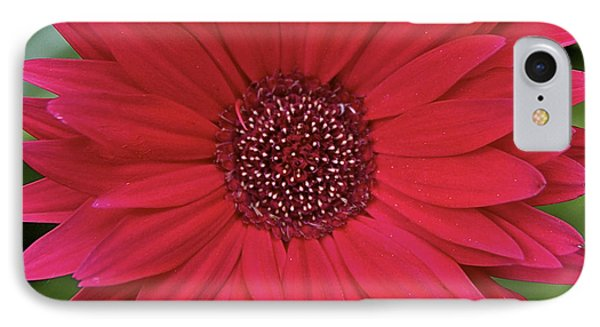 Gerber Daisy In Red IPhone Case by Susan Crossman Buscho