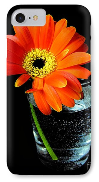 Gerbera Daisy In Glass Of Water IPhone Case by Nina Ficur Feenan