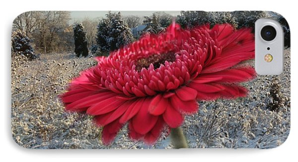 Gerbera Daisy In The Snow Phone Case by Trish Tritz