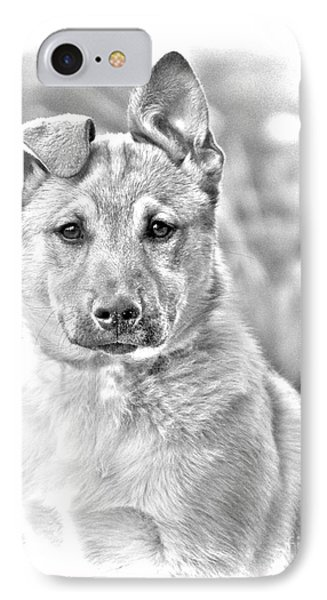 German Shepard Puppy IPhone Case by James BO  Insogna