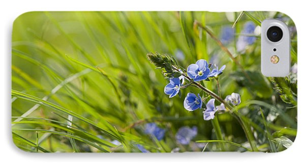 Germander Speedwell Phone Case by Anne Gilbert
