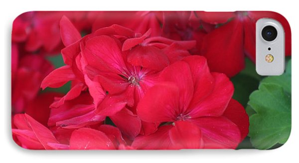 Germaniums IPhone Case by Nance Larson