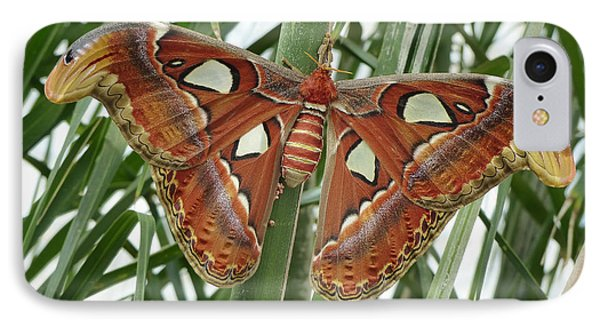 IPhone Case featuring the photograph Giant Atlas Moth by Cindy McDaniel