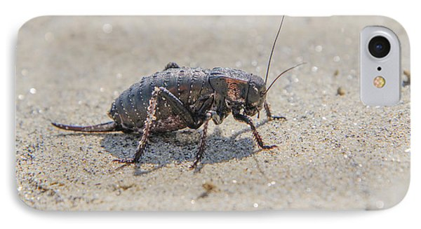 IPhone Case featuring the photograph Giant Bradyporid Bushcricket - Bradyporus Dasypus by Jivko Nakev