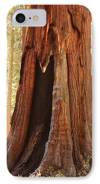 Giant Forest Sequoia Tree IPhone Case