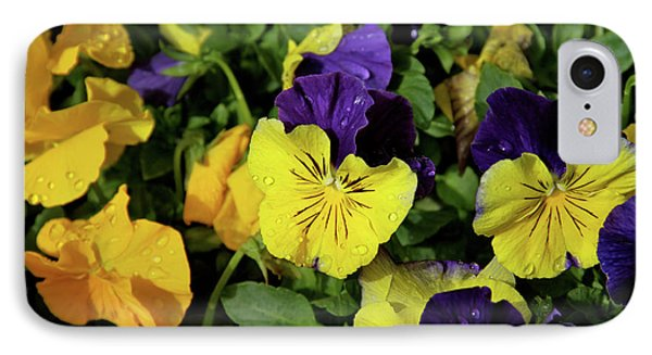 Giant Garden Pansies IPhone Case by Ed  Riche