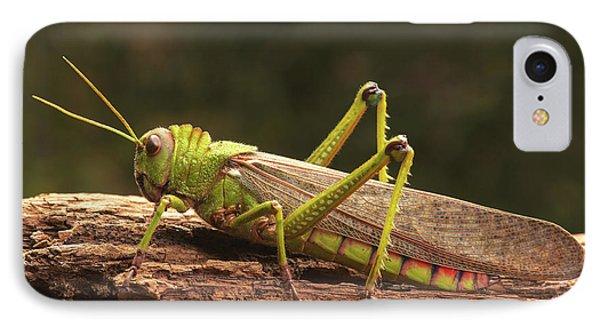 Giant Grasshopper IPhone 7 Case