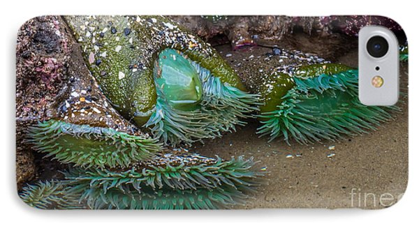 Giant Green Anemone IPhone Case