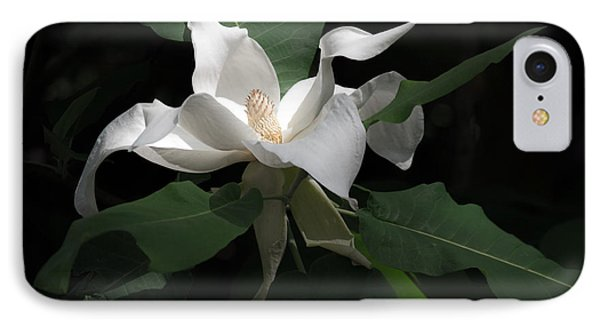 Giant Magnolia IPhone Case by Angela DeFrias