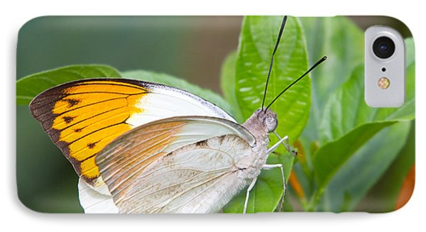 Giant Orange Tip Butterfly IPhone Case