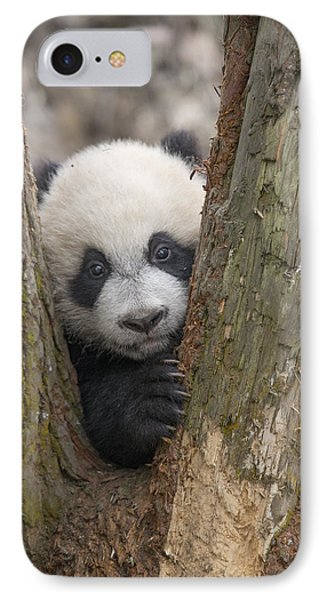 Giant Panda Cub Bifengxia Panda Base IPhone Case by Katherine Feng