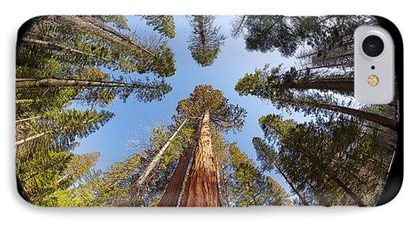 Giant Sequoia Fisheye IPhone Case by Jane Rix