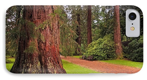 Giant Sequoia Or Redwood. Benmore Botanical Garden. Scotland Phone Case by Jenny Rainbow