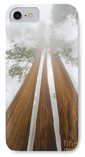 Giant Sequoias In The Fog  IPhone Case