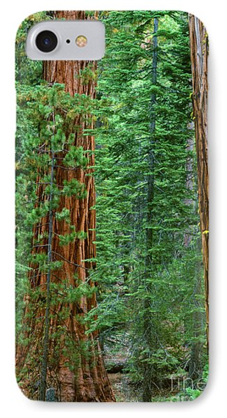 Giant Sequoias Sequoiadendron Gigantium Yosemite Np Ca IPhone Case by Dave Welling
