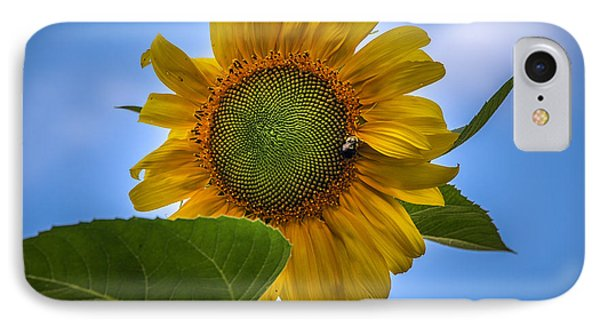 IPhone Case featuring the photograph Giant Sunflower by Phil Abrams