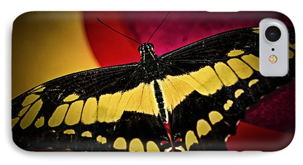 Giant Swallowtail Butterfly Phone Case by Elena Elisseeva