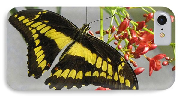 Giant Swallowtail IPhone Case by Jennifer Wheatley Wolf