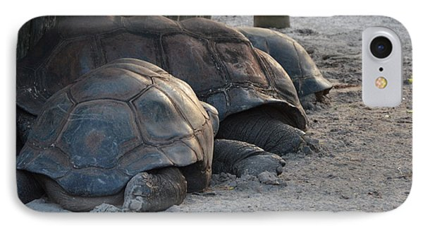 IPhone Case featuring the photograph Giant Tortise by Robert Meanor