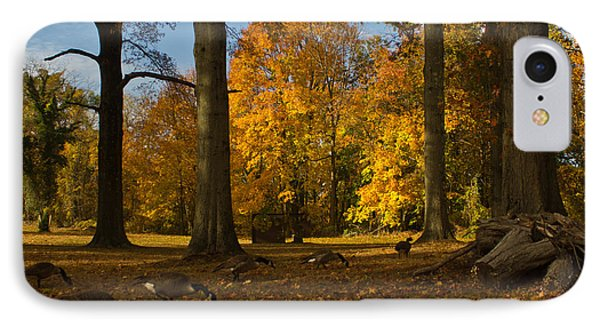 Giant Trees And Ducks Feeding IPhone Case