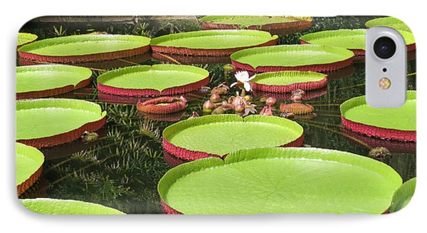 Giant Water Lily Platters IPhone Case