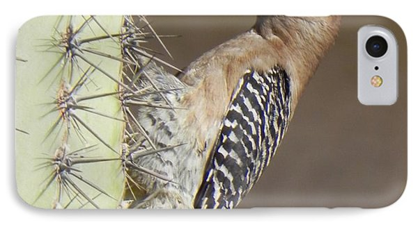 IPhone Case featuring the photograph Gila Woodpecker by Deb Halloran