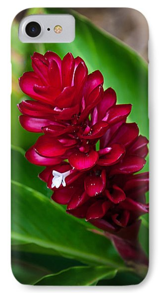 Ginger Flower IPhone Case by April Reppucci