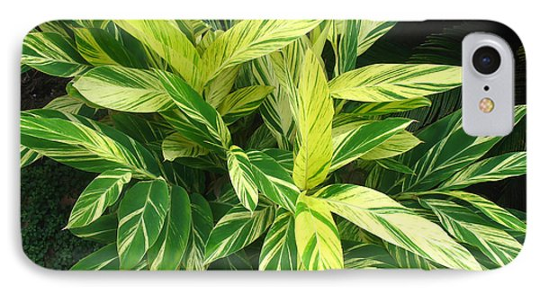Ginger Lily. Alpinia Zerumbet IPhone Case by Connie Fox
