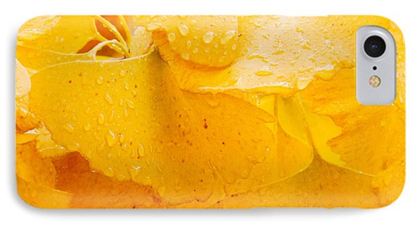 IPhone Case featuring the photograph Ginkgo Biloba Leaves by Vizual Studio