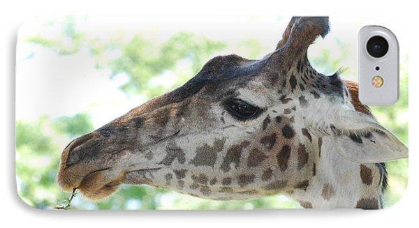 Giraffe Chewing On A Tree Branch IPhone Case by DejaVu Designs