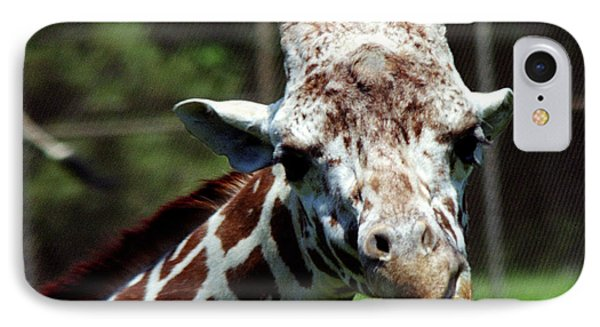 IPhone Case featuring the photograph Giraffe Looking by Tom Brickhouse