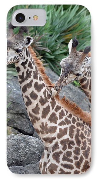Giraffe Massage IPhone Case by Richard Bryce and Family