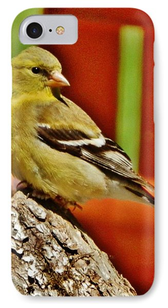IPhone Case featuring the photograph Girlie Goldfinch by VLee Watson