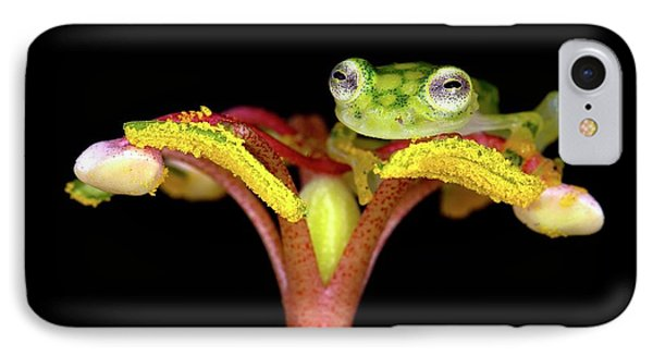 Glassfrog On A Flower IPhone Case by Nicolas Reusens