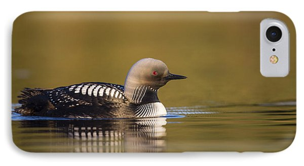 Glassy Waters And A Pacific Loon IPhone Case by Tim Grams