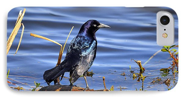 Glorious Grackle Phone Case by Al Powell Photography USA
